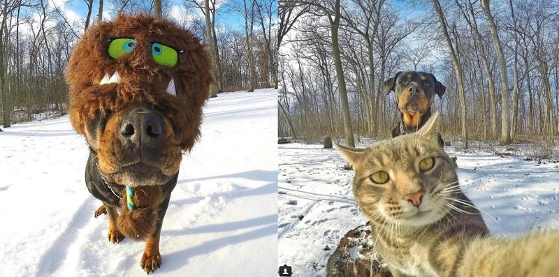 Foto Selfie Hewan yang Unik DAF