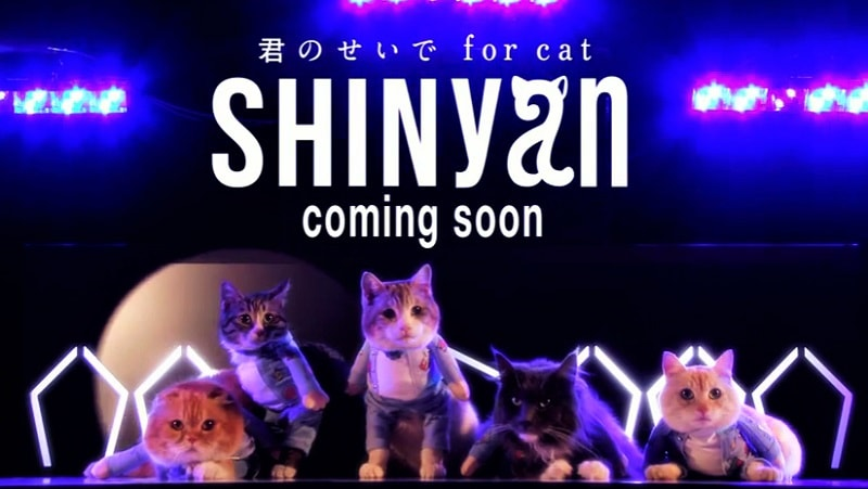 Boyband Kucing pertama SHINyan!
