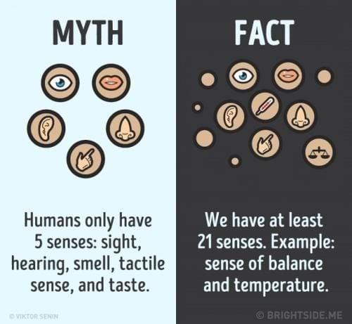 Mitos dan Fakta Tentang Indra Tubuh
