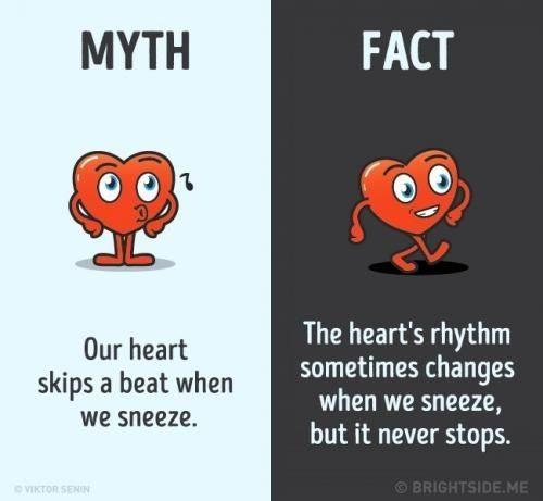 Mitos dan Fakta Tentang Jantung