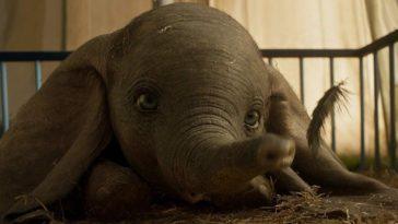 Gambar Baru Dumbo