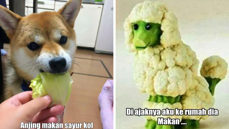10 Meme Lucu 'pakai Sayur Kol' Ini Akan Bikin Kamu Ngakak Enggak Ketolongan! Dafunda Gokil