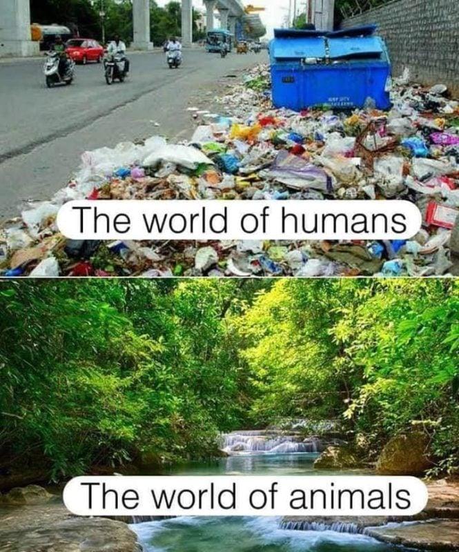 Ilustrasi Miris Manusia Dan Binatang Dafunda Gokil 5