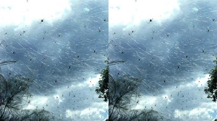 Mau Kiamat Inilah 5 Fenomena Hujan Aneh Yang Paling Mengerikan! Hujan Laba Laba