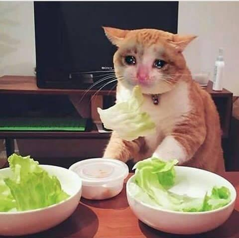 Momen Kucing Ini Gagal Imut, Malah Bikin Ngakak! 1