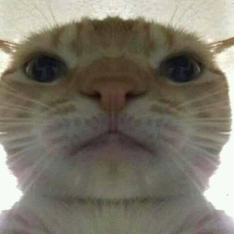 Momen Kucing Ini Gagal Imut, Malah Bikin Ngakak! 10