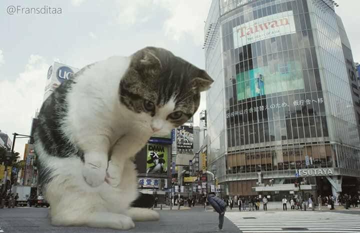 Monster Kok Lucu, Berikut 12 Foto Editan Saat Kucing Menjadi Raksasa Dan Menguasai Dunia! 1