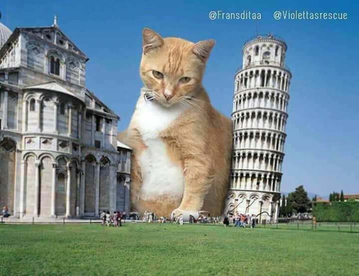 Monster Kok Lucu, Berikut 12 Foto Editan Saat Kucing Menjadi Raksasa Dan Menguasai Dunia! 10