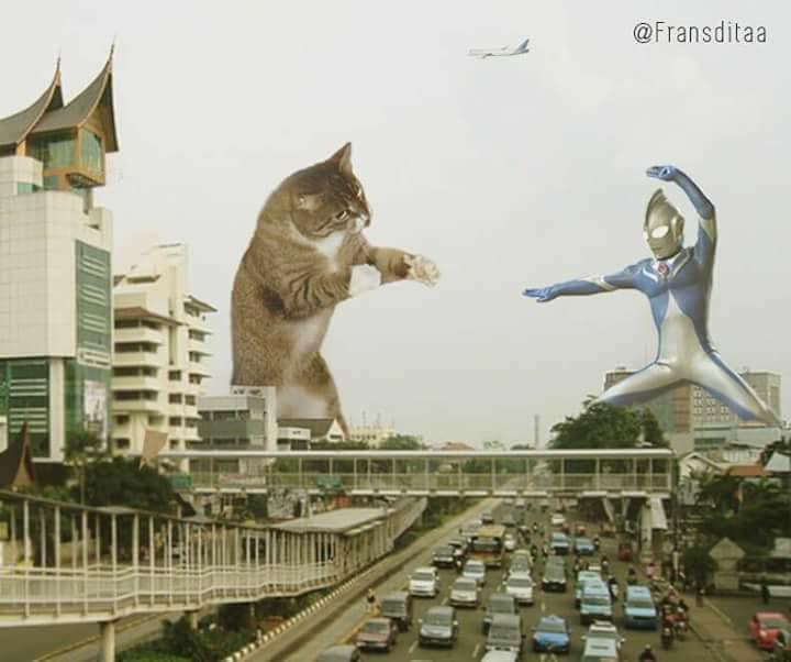 Monster Kok Lucu, Berikut 12 Foto Editan Saat Kucing Menjadi Raksasa Dan Menguasai Dunia! 18