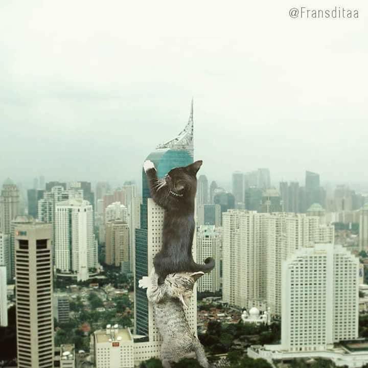 Monster Kok Lucu, Berikut 12 Foto Editan Saat Kucing Menjadi Raksasa Dan Menguasai Dunia! 7
