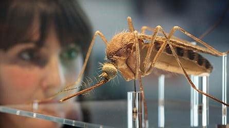Cara Google Membasmi Nyamuk Di Dunia